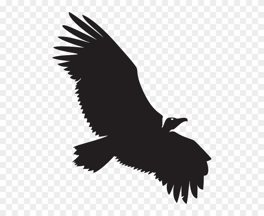 Spread, Silhouette, Bird, Wings, Animal, Vulture.