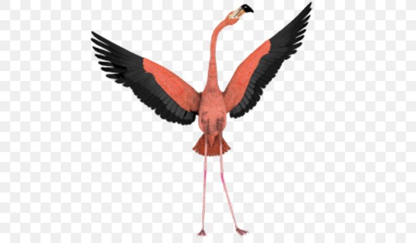 Bird Flight Flamingo Wing Clip Art, PNG, 600x480px, Bird.