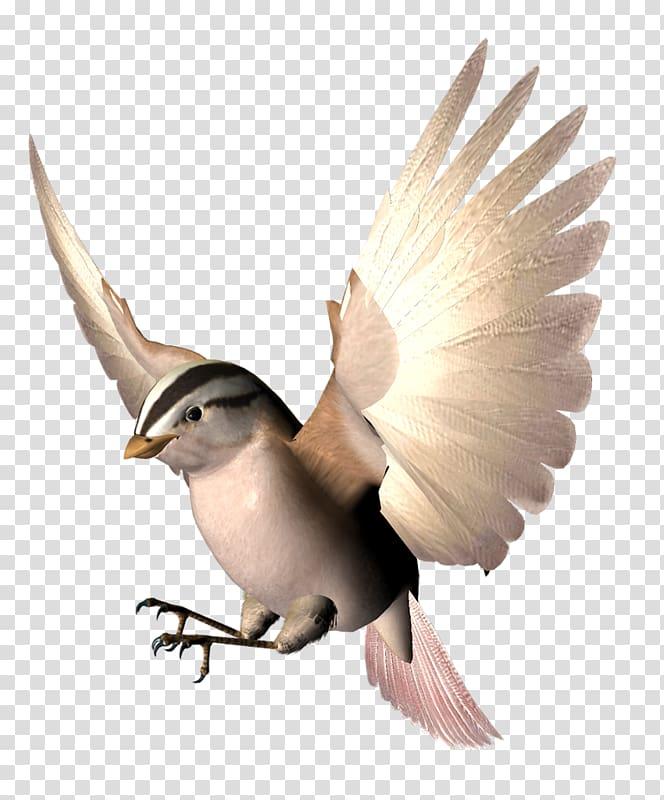 Bird Wing Beak Animation, Bird spreading its wings.