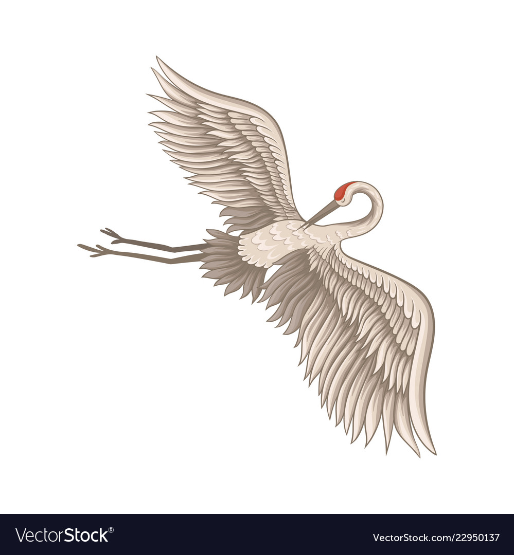 Beautiful crane flying with wide open wings bird.