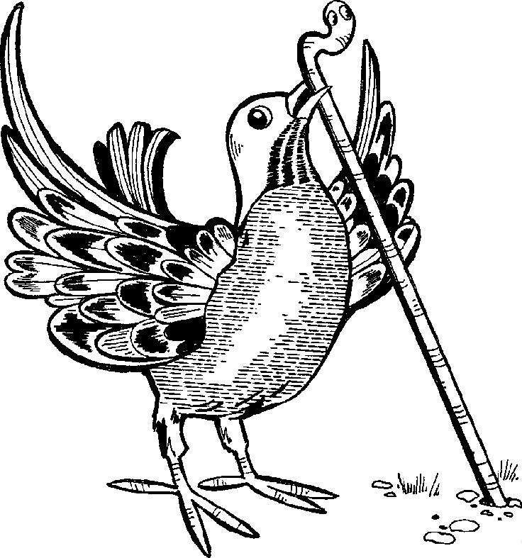 Bird Worm.