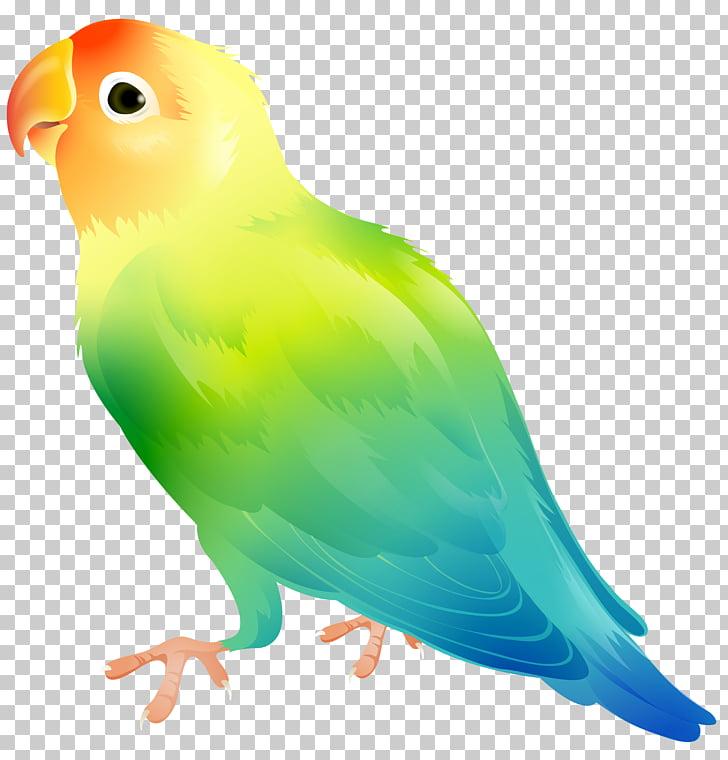 Lovebird Parrot , Parrot Bird , green, blue, and yellow bird.