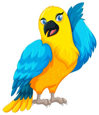 Parrot bird with yellow and blue feather.