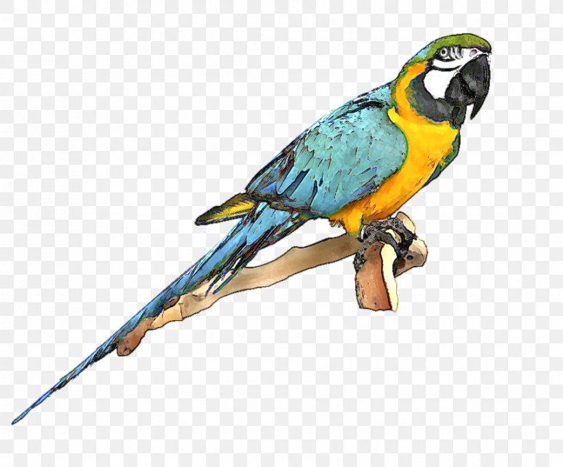 Parrot Bird Blue.