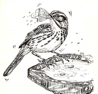 Free Bird Bath Clipart.
