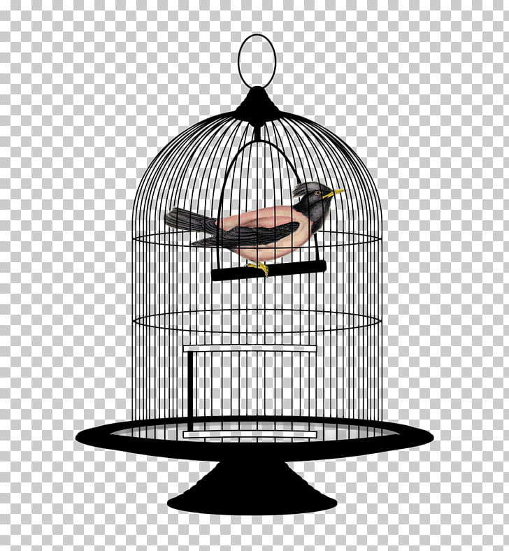 Lovebird Birdcage , Bird Cage PNG clipart.