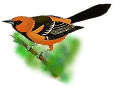 Complete Birding and Birdwatching Site.