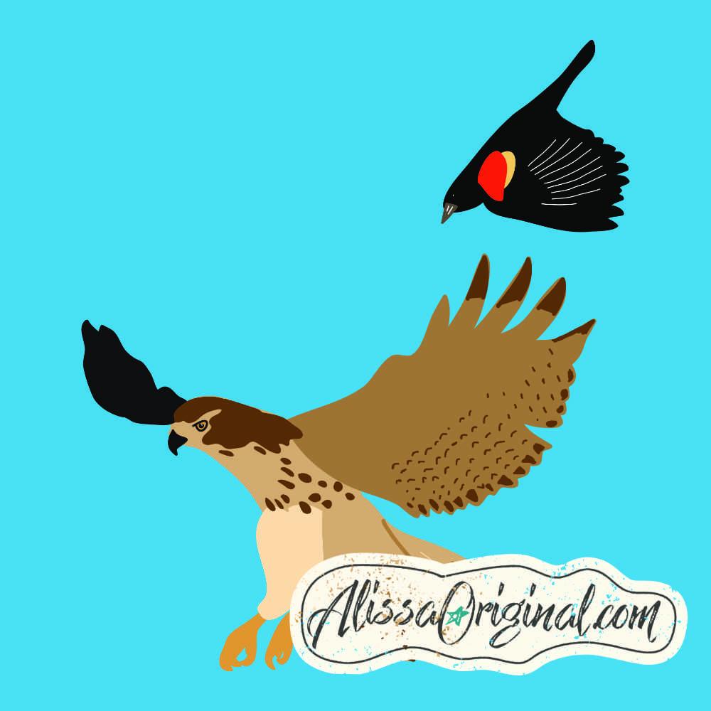 Blackbird Chasing a Hawk.