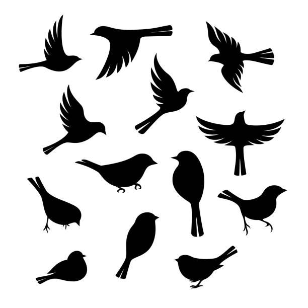 Best Bird Illustrations, Royalty.