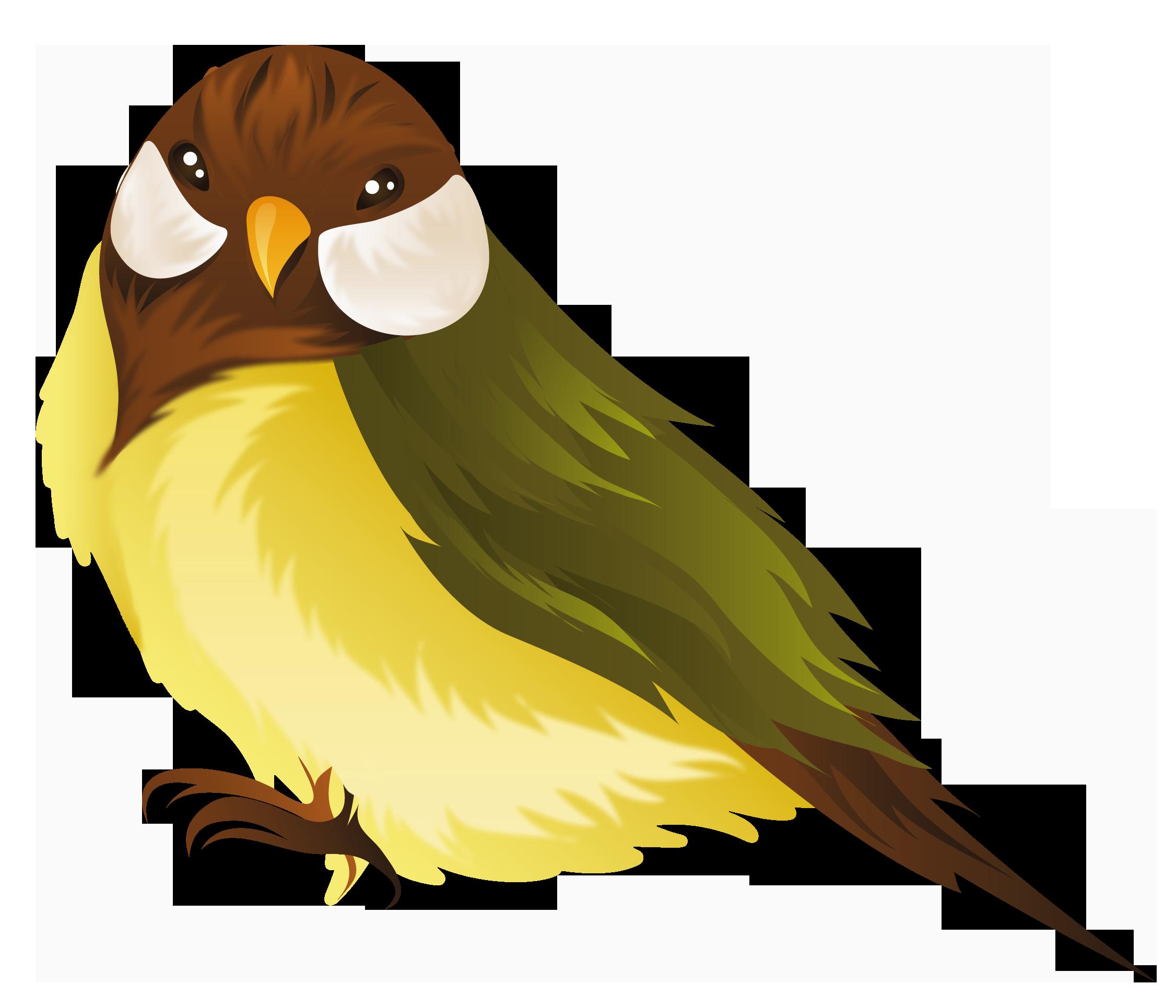 19 Bird image download HUGE FREEBIE! Download for PowerPoint.