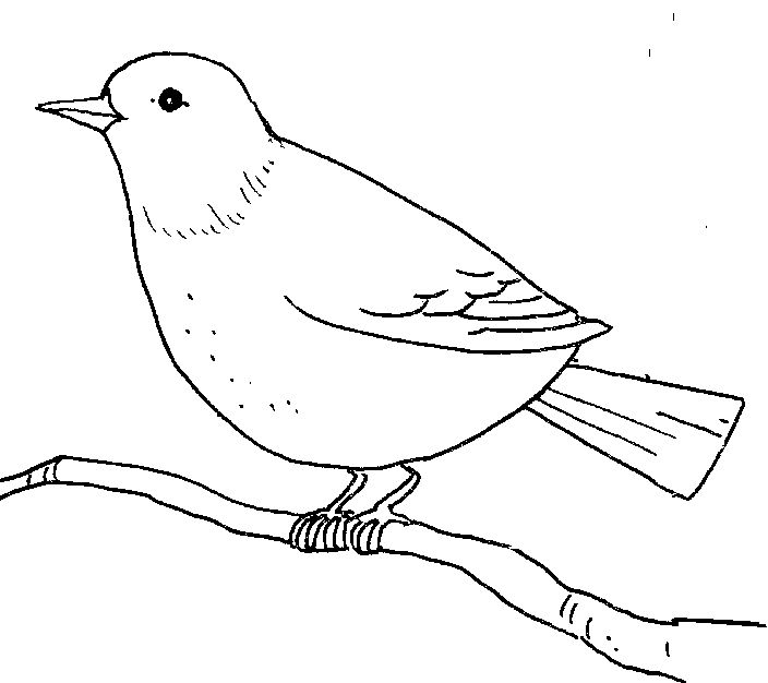 Quail Line Art : Birds clipart outline clipground