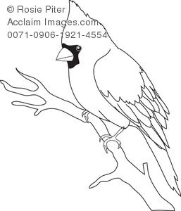 17 Best ideas about Bird Outline on Pinterest.