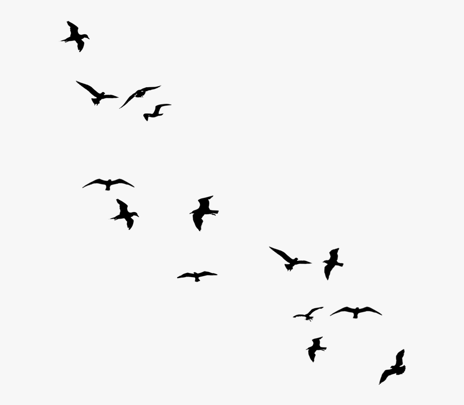 Flying Bird Transparent Clipart.