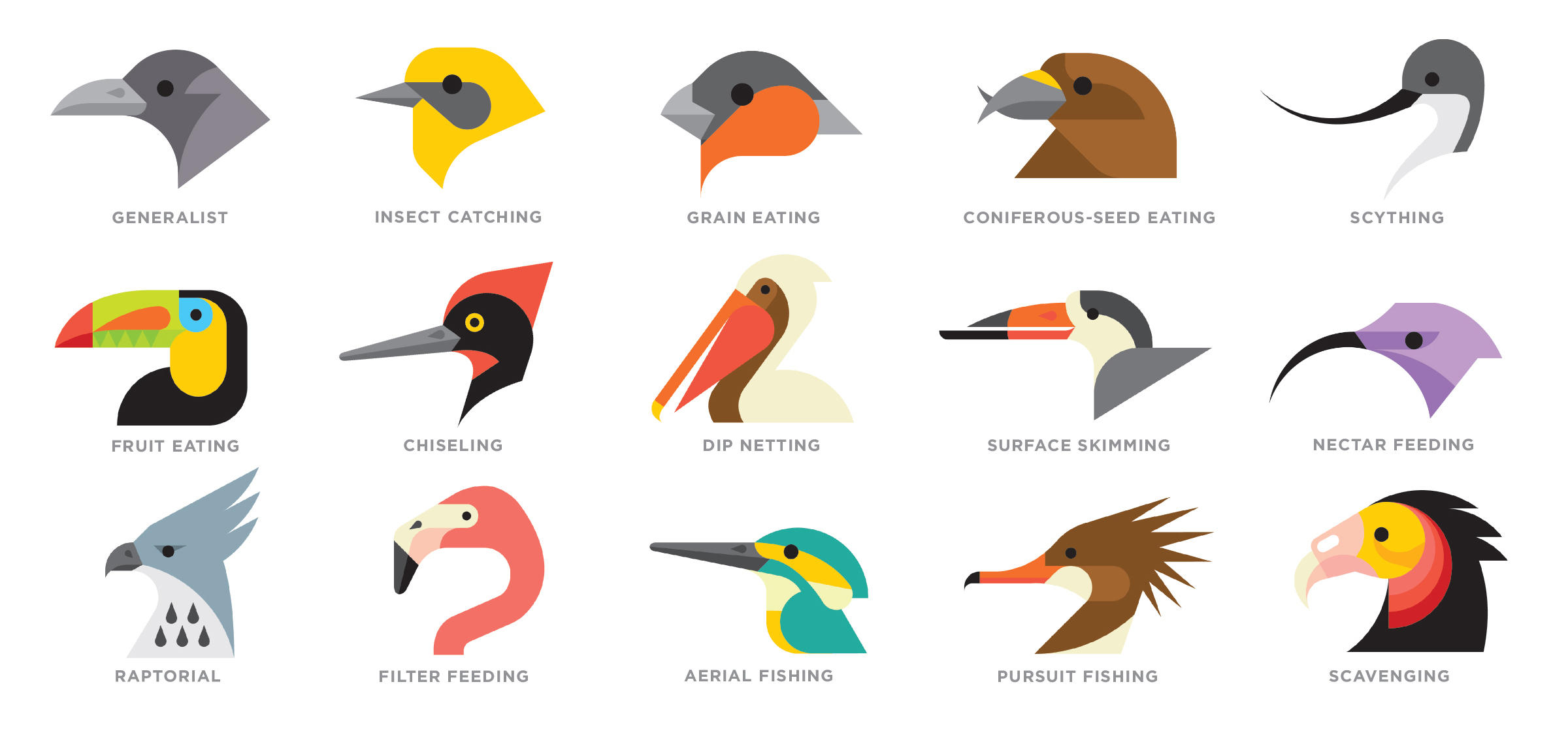 In an ecosystem where there live many birds, we often see that there.
