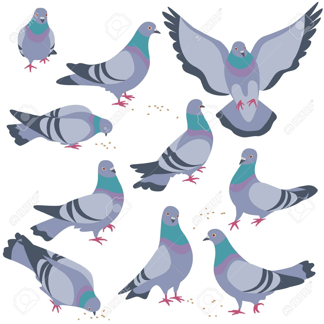 Set of rock doves isolated on white background. Bluish pigeons...