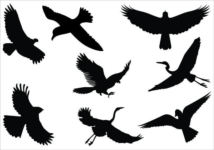Bird Silhouette Flying Bird Silhouette Flying Bird Silhouette Clip.