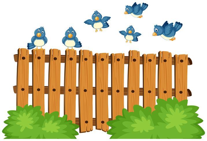 Blue birds flying over wooden fence.