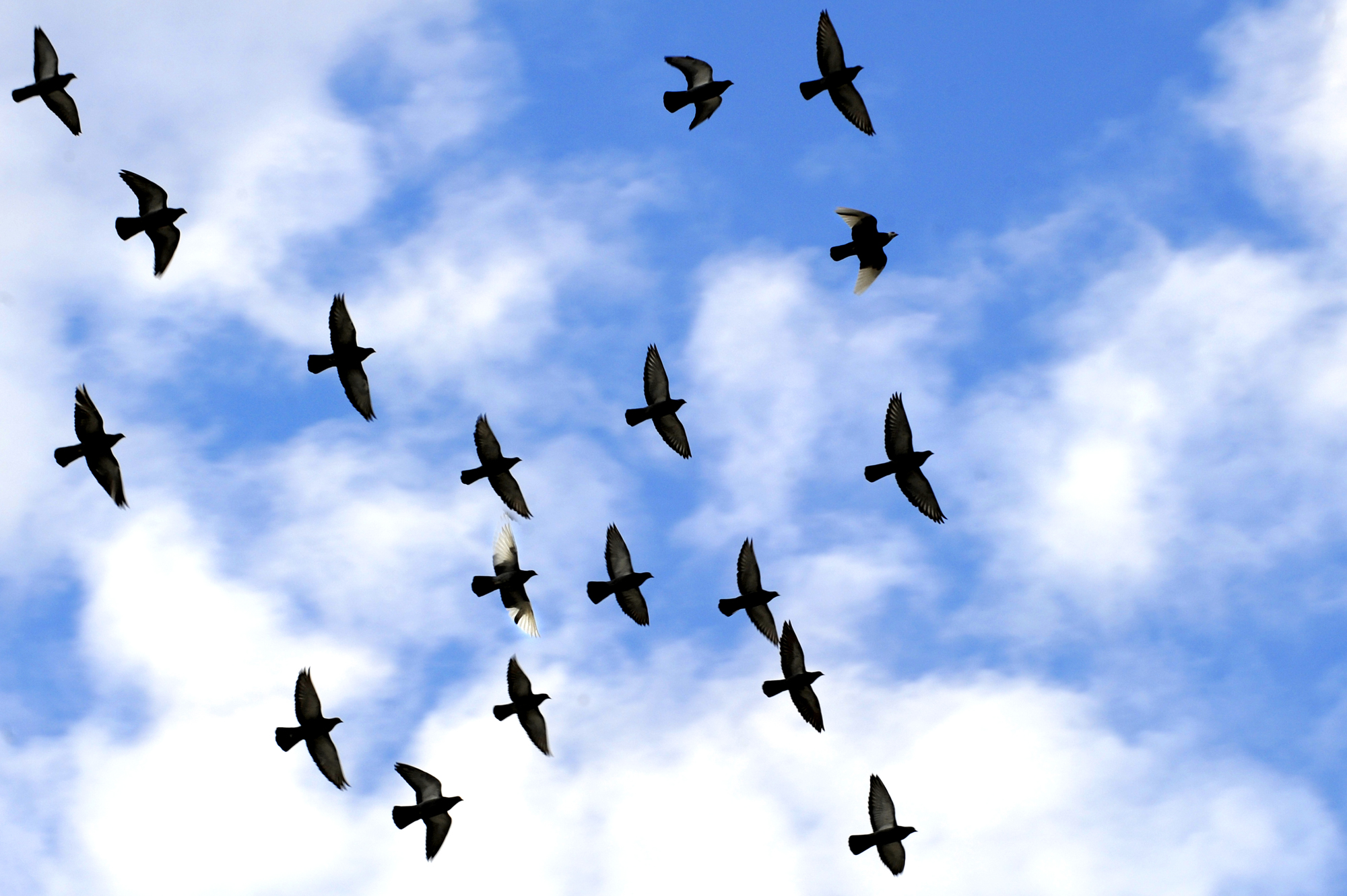 Free Flying Birds, Download Free Clip Art, Free Clip Art on.