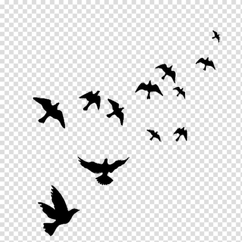 Bird Wall decal Polyvinyl chloride, flying bird transparent.