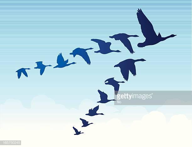60 Top Birds Flying Stock Illustrations, Clip art, Cartoons, & Icons.