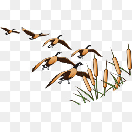 Wings Fly Geese PNG Images.