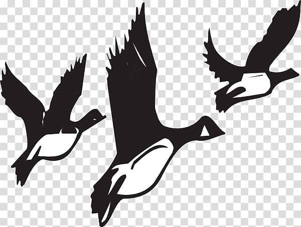 Canada Goose Bird migration , Of Geese transparent background PNG.