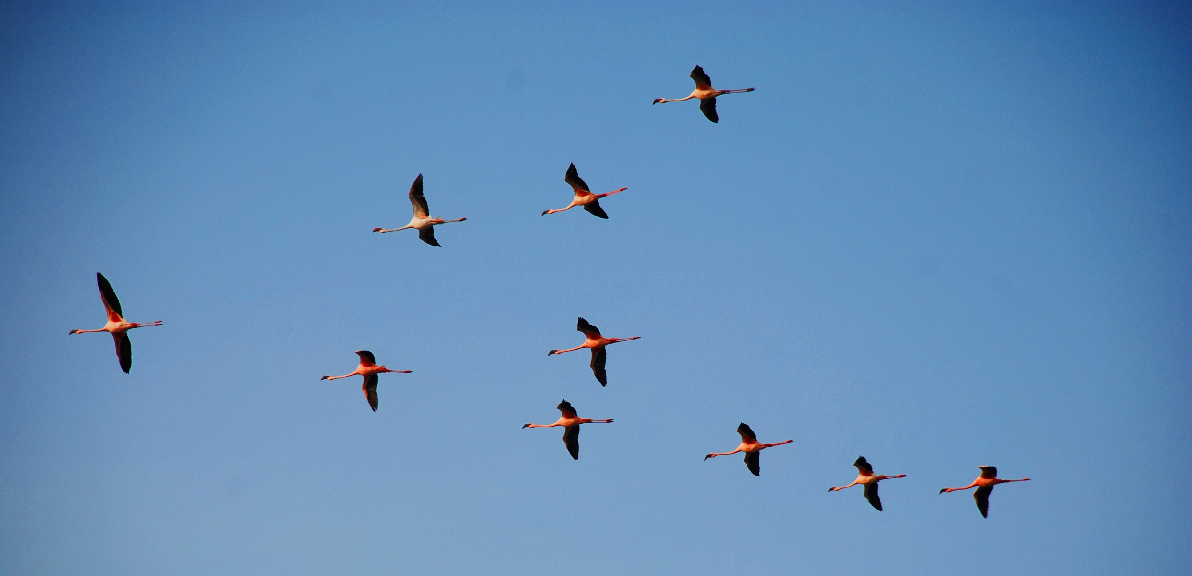 Free Birds Flying, Download Free Clip Art, Free Clip Art on.