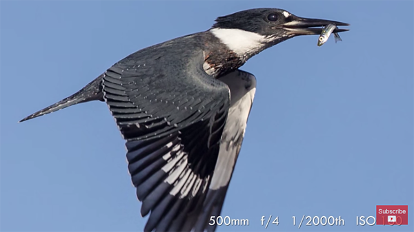 Wildlife Tutorial: Here's How to Shoot Great Photos of Birds in.