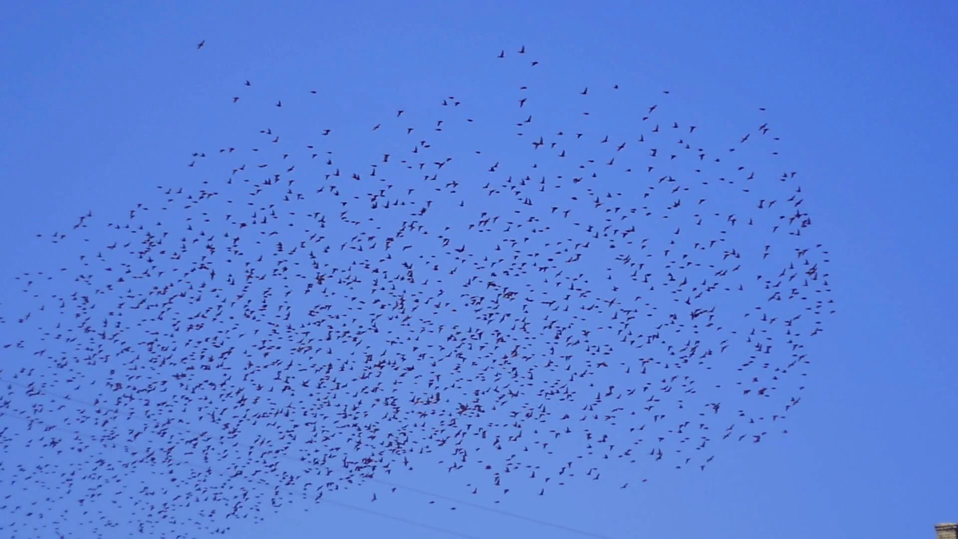a flock of birds flying in the sky Stock Video Footage.