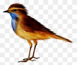 Oiseaux,birds Birds, Autumn, Photoshop, Clip Art, Fall.