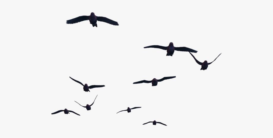 Blackbird Clipart Bird Gif.