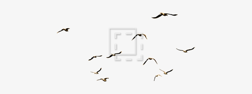 Flock Of Sea Birds.