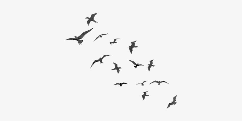 Free Cute Bird Photoshop Brushes.