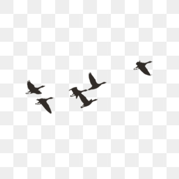 Flying Bird PNG Images.