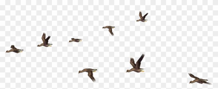 Flock Of Birds Png.