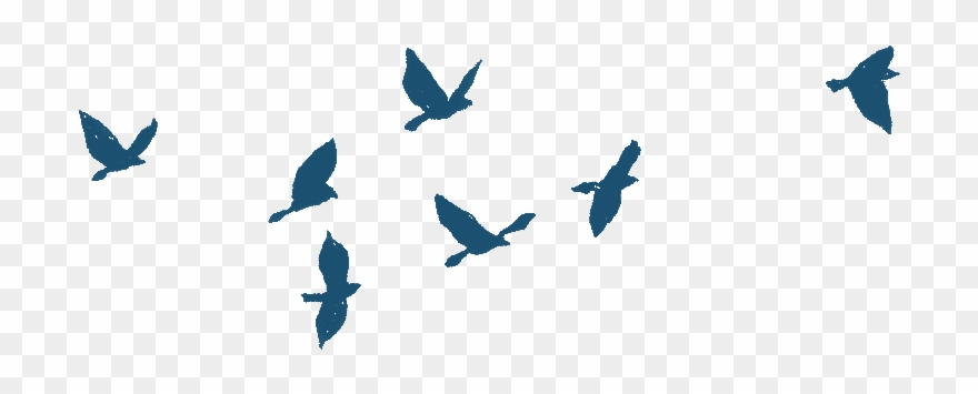 Bird Gif Png.