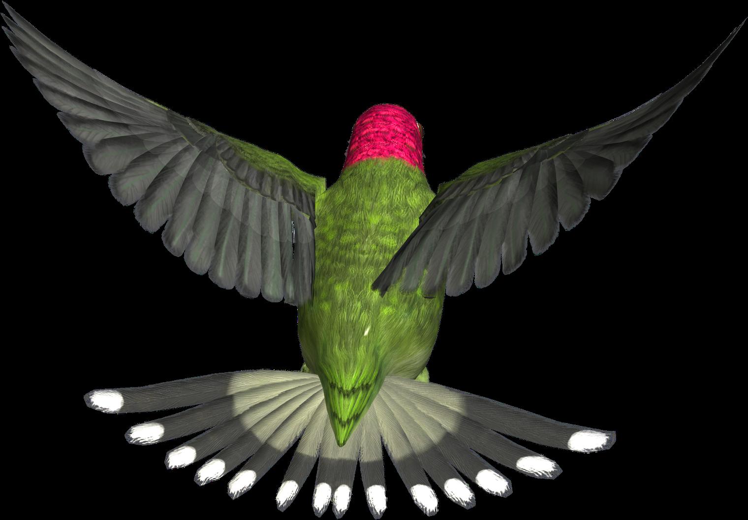 Download Bird Png.