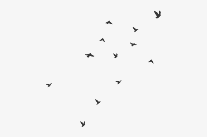 Transparency Transparent Transparent Png Png Birds.