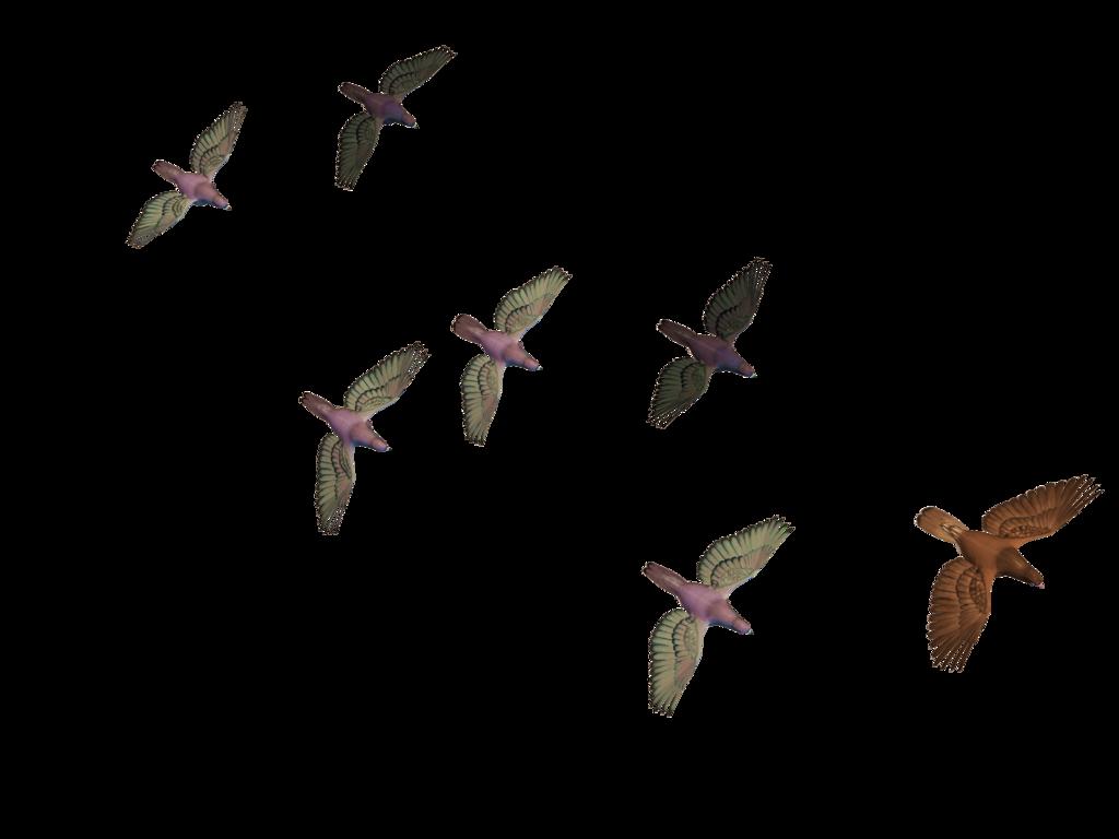 Bird Flight Columbidae Goose.