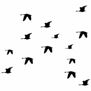 Cartoon Bird Flying Gif Www Imgkid Com The Image Kid.