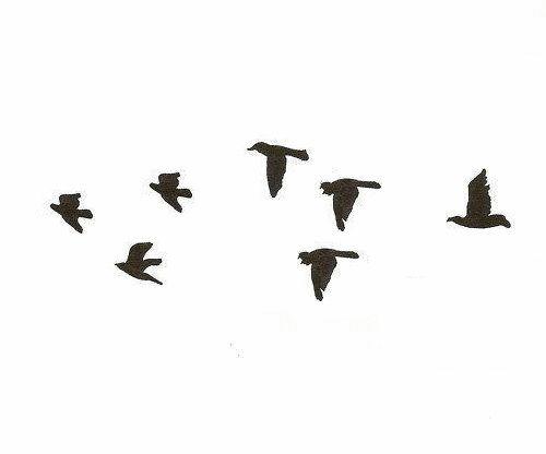 Birds . Flight . Black and white . Minimal.