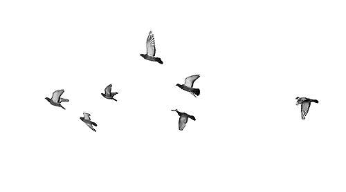 Free Flying Birds Gif Transparent, Download Free Clip Art, Free Clip.