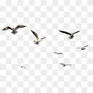 Bird Gif PNG Images, Free Transparent Image Download.