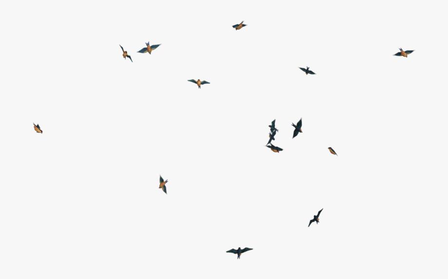 Bird Flock Png.