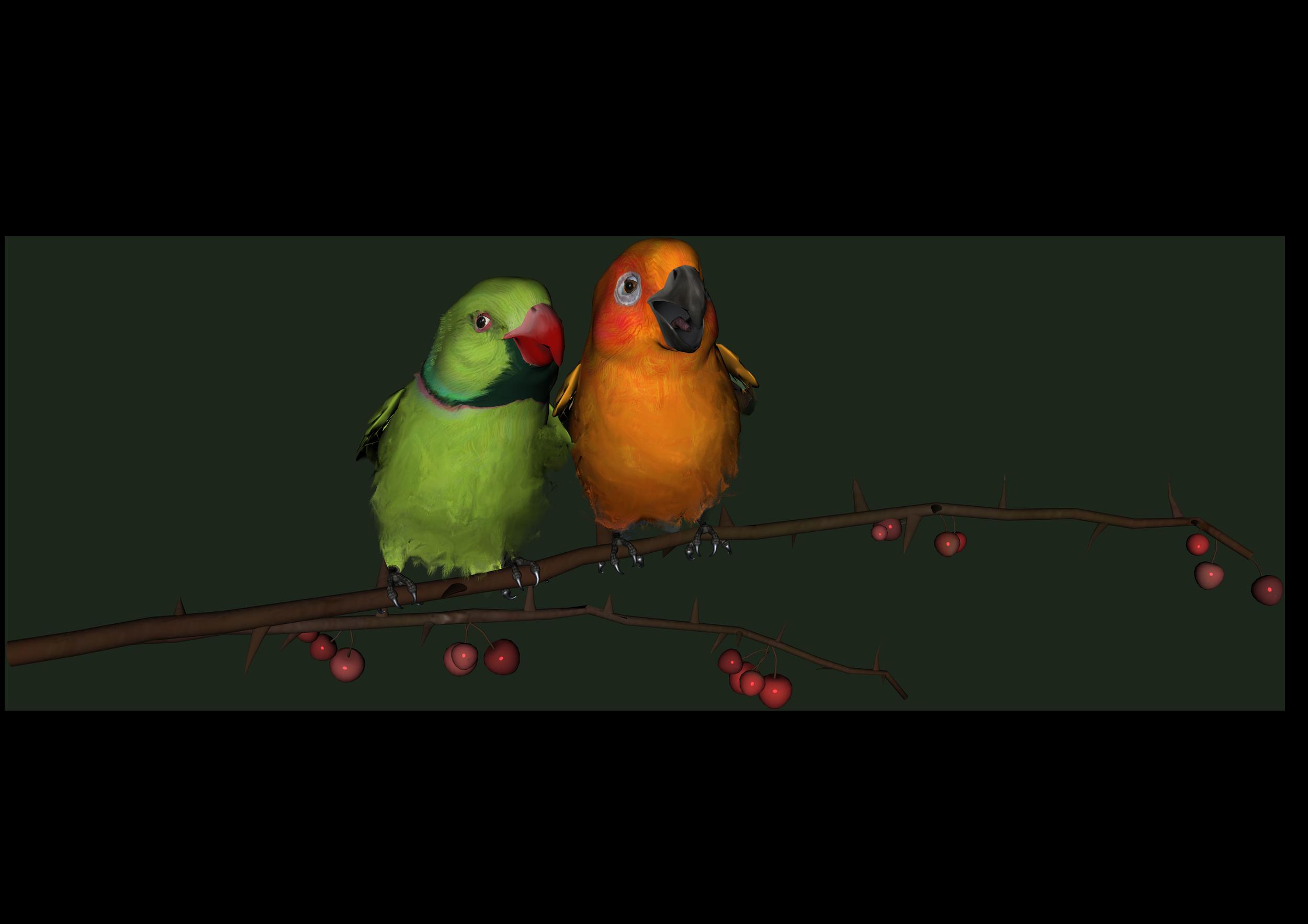 Love Birds PNG Transparent Images.