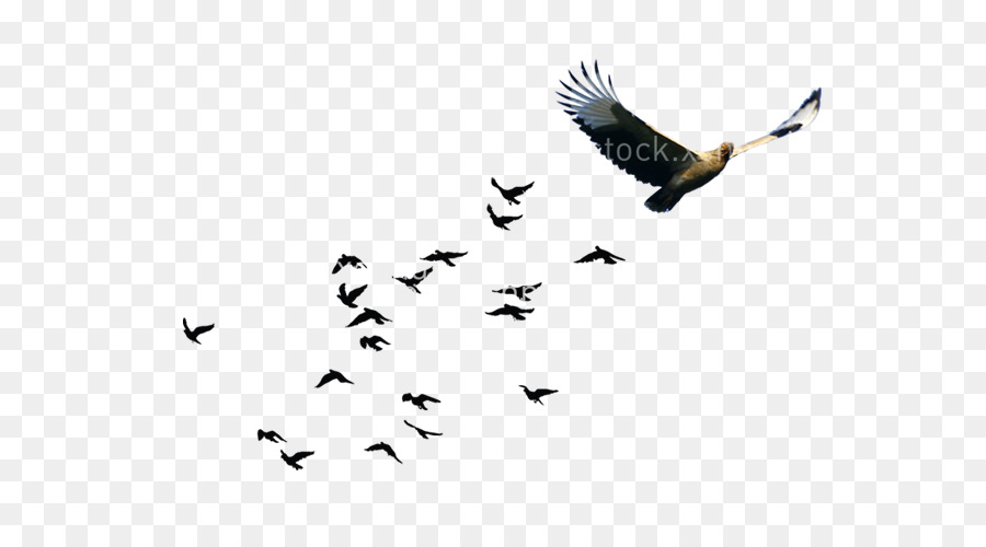 Bird Line Drawing png download.