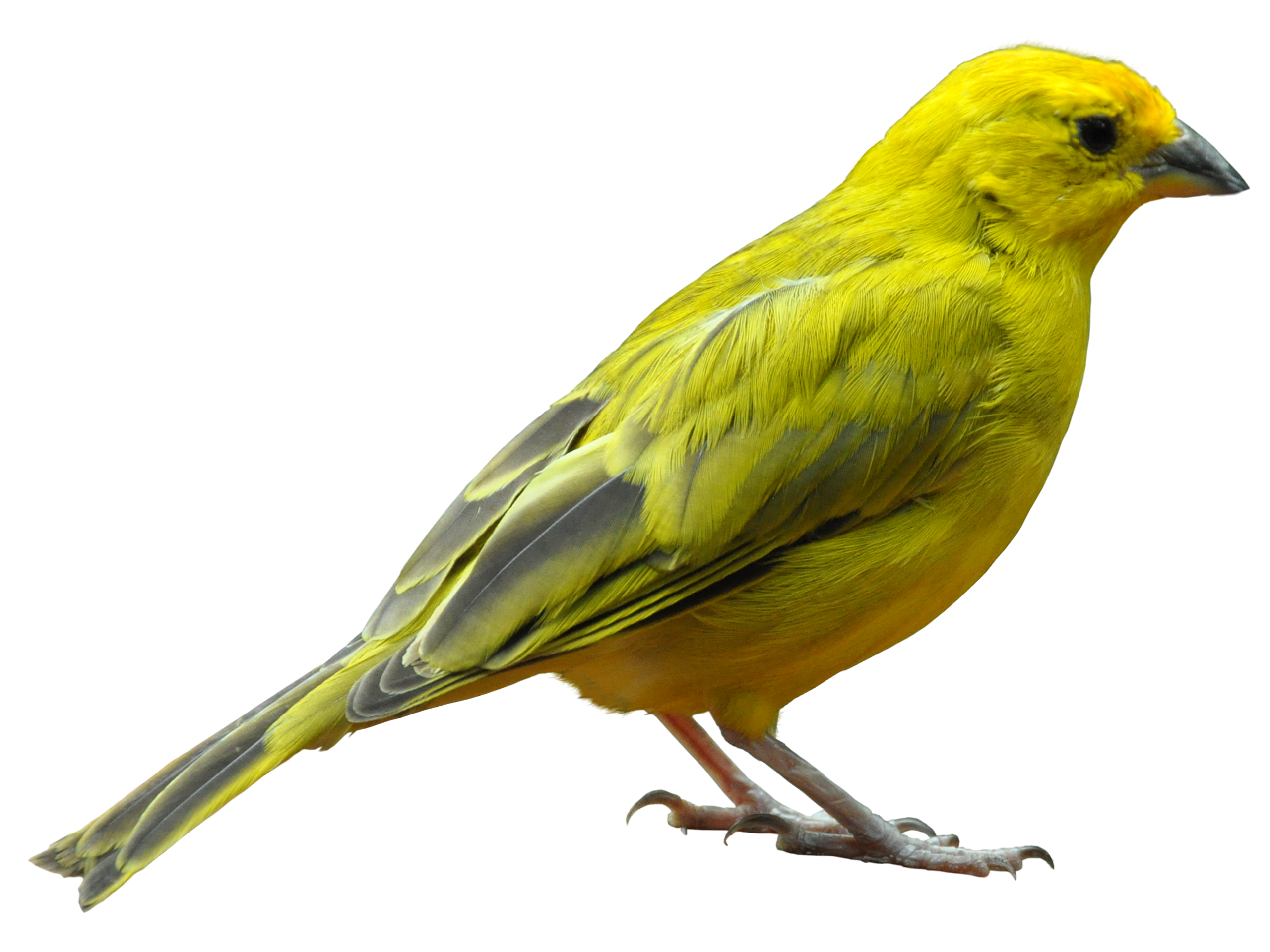 Birds PNG images free download, birds PNG.