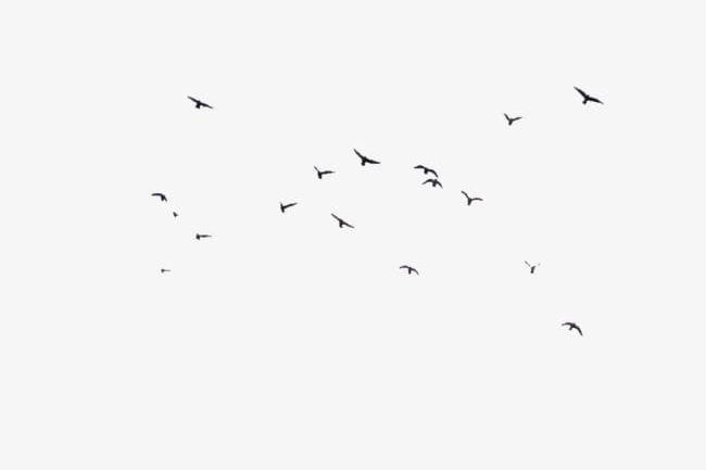 Birds Fly Floats PNG, Clipart, Birds, Birds Clipart.