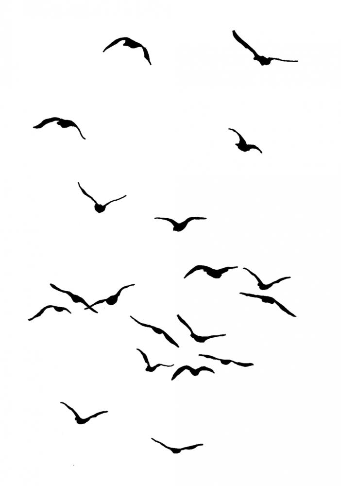Flying birds … in 2019.