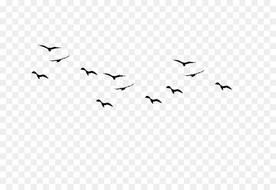 Flying Bird Background.